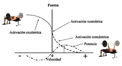 fuerza fase excentrica