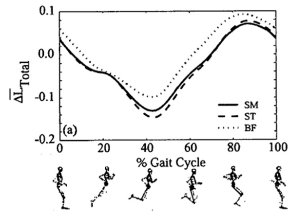 curl-cycle
